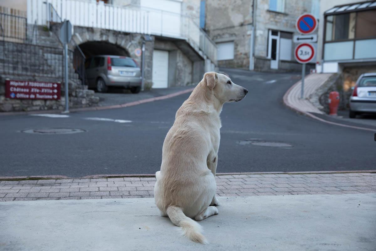 【サンティアゴ巡礼・ル・ピュイの道】5日目:待ちに待った快晴! サンタルバン・シュル・リマニョル 〜 ラスブロ 25km